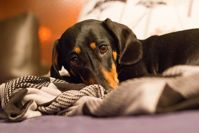 Don't Poison Your Pet! Watch Out for These Household Items