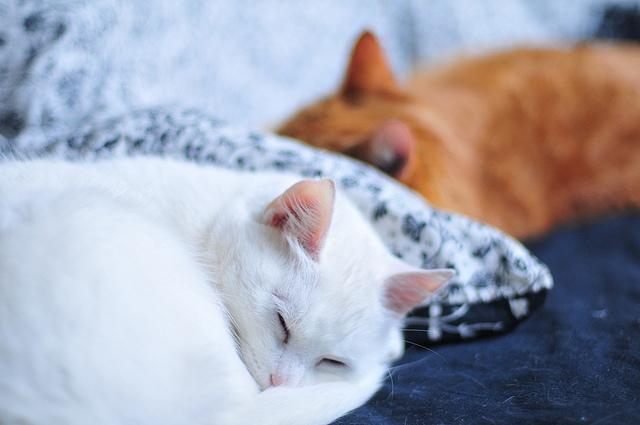 Cats Sleeping Disorders